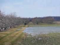 Pommiers-inondés